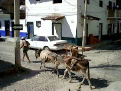 Burros in Puerto Vallarta